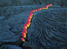 The sprouts coming out of this lava crack have nothing to do with lava or fire. They are actually flowers called red hot poker or torch lily.