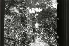 Black and white analogue photography by Svetlana Babaylova Christmas Tree, Black And White, Holiday Decor, Artwork, Photography, Outdoor, Home Decor, Art Work, Homemade Home Decor