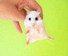 Tips for a Better Pet Photography via http://cariblogger.com