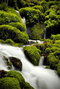 Mossy Falls (Detail), Columbia River Gorge by Edward Thomas    Gorgeous !