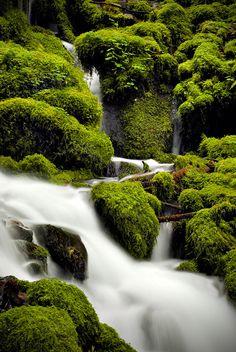 Mossy Falls (Detail), Columbia River Gorge by Edward Thomas    Gorgeous !