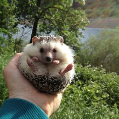 Follow him on Instagram for further adventures. | The Fantastic Adventures Of Biddy The Hedgehog