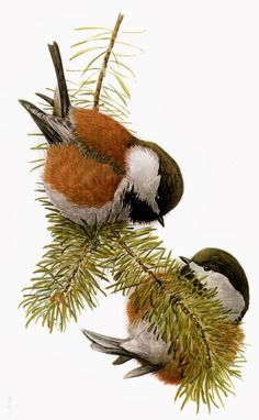 Wild Birds Unlimited: October 2013