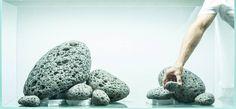 6 Indoor Plants That Love The Dark: A Tip From The Garden Center Nursery Fish Aquarium Decorations, Aquarium Setup, Nano Aquarium, Aquarium Systems, Biotope Aquarium, Cichlid Aquarium, Tropical Fish Aquarium, Planted Aquarium, Fish Tank Themes