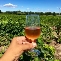 Eat Your Way Through The Bounty Of The Eastern Townships Stuff To Do, Things To Do, Of Montreal, Wine Country, The Fresh, Weekend Getaways, Quebec, First Night, Alcoholic Drinks