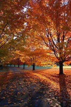 Autumn Splendor by TheIndelibleGardenia