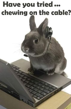 Had a house rabbit, and yes he would've chewed on the cable by now. Funny #Bunny #Rabbit