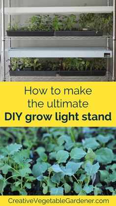 It's Very Difficult To Grow Healthy Seedlings In Front Of A Window. Rather, Assemble Your Own Diy Grow Light Stand With Supplies From The Hardware Store. Indoor Vegetable Gardening, Hydroponic Gardening, Organic Gardening, Container Gardening, Hydroponic Growing, Gardening Vegetables, Urban Gardening, Growing Herbs, Growing Vegetables