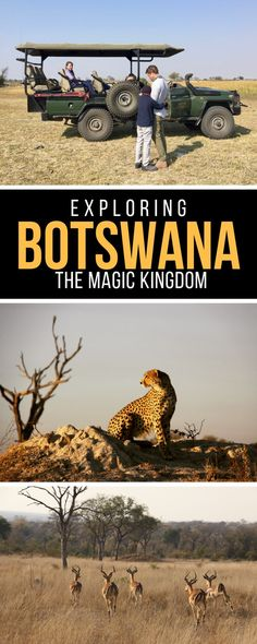 EXPLORING BOTSWANA, THE MAGIC KINGDOM.  There is no sound I can think of that compares to that of the African bush. Silence. Almost complete silence, except for the distant (and sometimes not so distant) roar of a lion, the slow, steady, padded thump of an elephant, the crunch of teeth on bone. The chorus of the wildlife. What helps make Botswana especially magical is how remote and small you feel......................