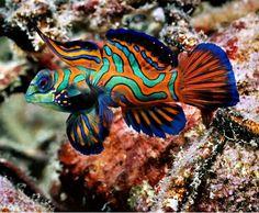 Los peces más bonitos y coloridos