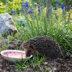 Grow Your Own Magazine - GYO Growing & How To Grow Vegetables tomatoes, fruit from your garden - Tips on Growing Growing Vegetables, 5 Ways, Wonders Of The World, Gardening Tips, Hedgehog, Garden Sculpture, Outdoor Decor, Plants, Blog