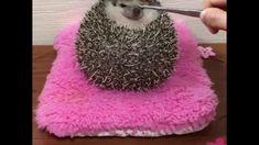 ごはんを食べようとして座布団から転げ落ちてしまったハリネズミが狂おしいほどのかわいさhttp://www.lv-reig.com