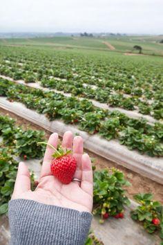 Adventures in Strawberry Farming at Pinch My Salt