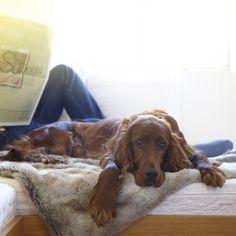 MiaCara dog blanket FELPA silver-grey/kitt