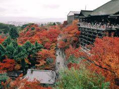 Fall Foliage of Kiyomizudera, Kyoto. Kyoto, Travel Photos, Grand Canyon, Tours, Fall, Nature, Autumn, Naturaleza