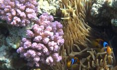 Coral Reef Pictures, Plants, Plant, Planets