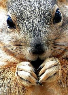Ok, I know I'm weird but I think squirrels are adorable!