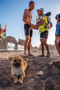 Bring Gobi Home - The amazing stray dog that participated in the 250km 'Gobi Desert March' race in China -Help me bring her home to the UK.