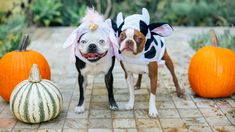 9 Creative Halloween Party Themes That Are So Good, It's Scary Halloween Party Themes, Halloween Dinner, Dog Halloween, Happy Halloween, Halloween Parade, Halloween 2018, Pumpkin Carving Party, Free Dogs, Pet Safe
