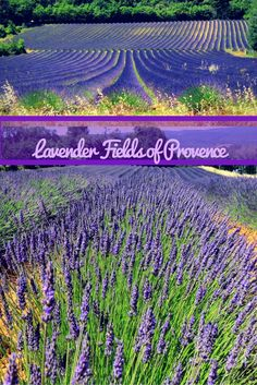 Lavender Fields France | Lavender Fields Provence Travel -  Our travelogue of day tour exploring the Lavender fields and other wonderful villages of Provence in France.