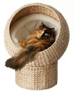 Cat diy idea.
