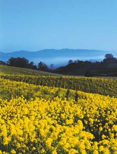 California Wine Country. A US destination I'd love to visit.