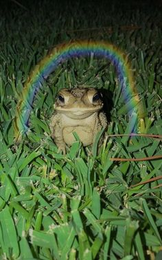 Cute Little Animals, Cute Funny Animals, Frog Pictures, Funny Animal Pictures, Cute Reptiles, Frog Art, Cute Frogs, Frog And Toad, Indie Kids