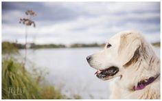 Dog portrait. Dog Portraits, Labrador Retriever, Toast, Pets, Gallery, Animals, Labrador Retrievers, Animales, Roof Rack