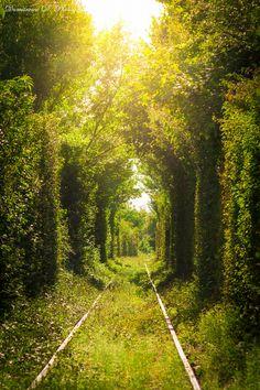 Love Tunnel in Romania by Dumitrescu David on 500px
