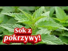 86. Sok z pokrzywy jak zrobić zapas! - YouTube Therapy, Medical, Youtube, Herbs, Health, Nature, Naturaleza, Health Care, Medicine