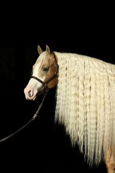 Check out that mane! Smart and Shiney, a champion Reining horse from the McQuay Stables, poses for a great photo.