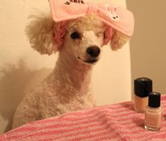 Poodles home manicure day Manicure At Home, Poodles, Crochet Hats, Lifestyle, Diy, Bricolage, Poodle, Toy Poodles, Do It Yourself