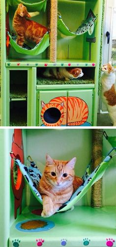 DIY Cat Hotel // Made Out of An Old Entertainment Center