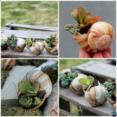 DIY Miniature Shell Garden-20 DIY Upcycled Container Gardening Planters Projects