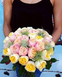 🌼 Garden Roses 🌼 #weddingbouquets #gardenroses #tillandsia #airplants #weddingday #roses #uniquebeauty #uniquerose #onlyforspecialpeople #pinkrose #pink #yellowflower #yellow #yellowrose Unique Roses, Garden Roses, Air Plants, Yellow Flowers, Wedding Bouquets, Wedding Day, Pink, Beauty, Pi Day Wedding