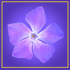 Pretty purple flower. This design can be used for stickers, tiles, trivets.