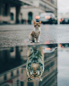 water reflections Art Print by Suryakrisnaa_ - X-Small Reflection Art, Water Reflections, Reflection In Water, Cute Cat Wallpaper, Animal Wallpaper, Baby Animals Pictures, Cute Baby Animals, Photomontage, Montage Photography