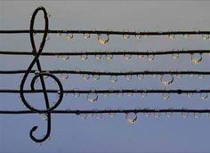 """""""In teoria, tutto è musica. Prendiamo gli uccelli: il canto di molti di loro ci sembra musicale perché si avvicina al nostro sistema tonale, al nostro Orecchio Occidentale. Però anche gli uccellini che pigolano suoni distanti dal nostro gusto stanno producendo musica, stanno """"cantando"""". Stefano Bollani, Parliamo di musica"""