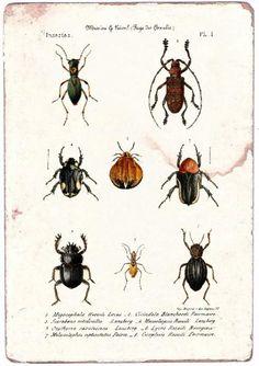 Beautiful insects!  www.madamea.no