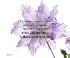 Quote by Galeno #quotes #quote #aforismi #nature #natura #flowers #citazioni #naturequotes #Galeno