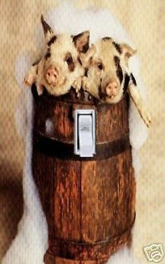 Pigs in A Barrel Switch Plate Cover | eBay