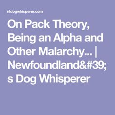 On Pack Theory, Being an Alpha and Other Malarchy... | Newfoundland's Dog Whisperer