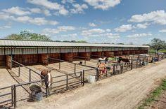 Goat Barn, Farm Barn, Show Cattle Barn, Horse Farm Layout, Horse Pens, Horse Barn Designs, Barn Stalls, Horse Barn Plans, Horse Shelter