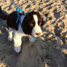 Beauty on the beach!