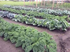 Garden Plants, Sprouts, Gardening, Organic, Vegetables, Patches, Collections, Ideas, Lawn And Garden