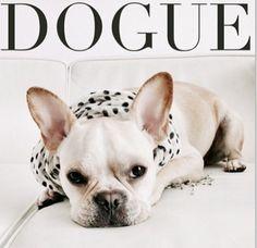 ❁ Dogue, French Bulldog