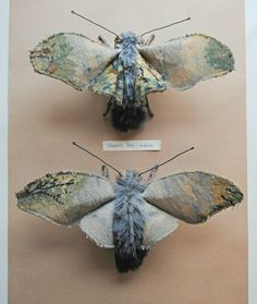 Textile moths By Mister Finch.  These are extraordinary.