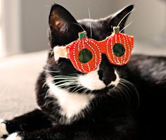Pumpkin shades for festively-inclined felines.