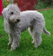 19 Best Ideal dog breeds for pets images | Dog breeds, Cute