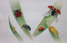 Nicole Banzato illustrator: (Coccinella septempunctata-Linnaeus 1758) The seven-spot ladybird,life cycle. colored pencils. il ciclo vitale della coccinella comune, matite colorate.